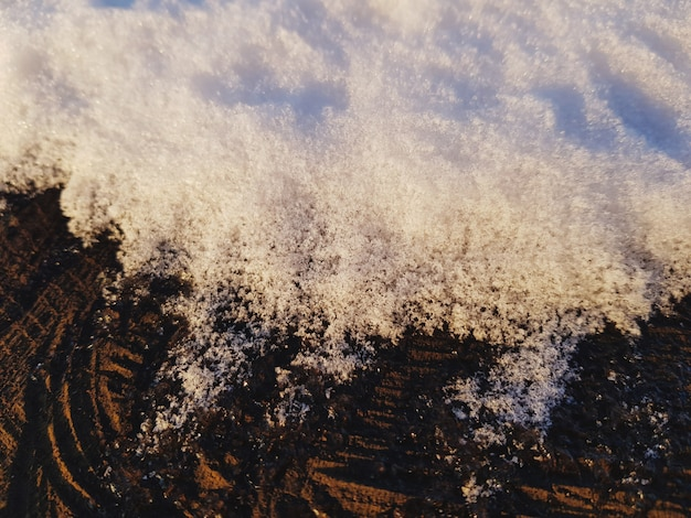 Snow on tree trunk