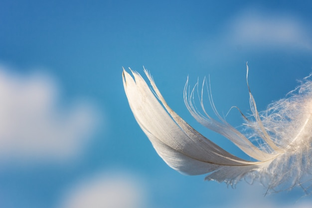 Snow-white feather on blue sky background