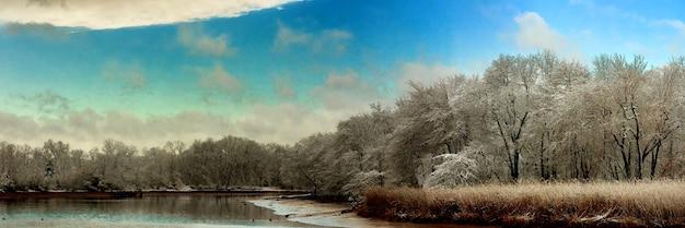 Снег зима небо облачный лес