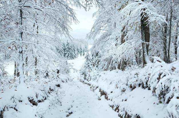 美しい山の森を抜ける雪に覆われた冬の地球