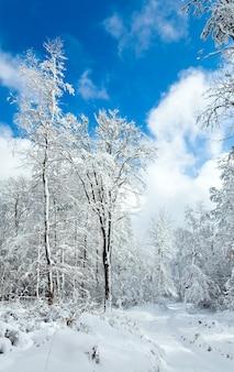 美しい山の雪に覆われた森を通る雪に覆われた冬の地球