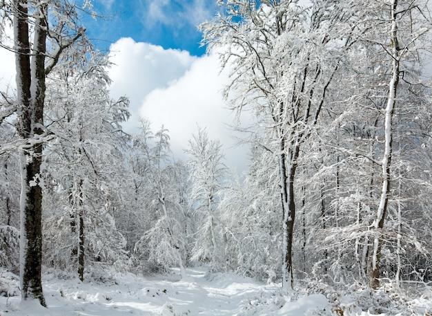 Заснеженная зимняя земляная дорога через красивый горный заснеженный лес