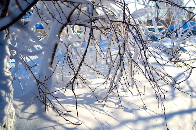 폭풍 후 눈 덮인 나뭇가지