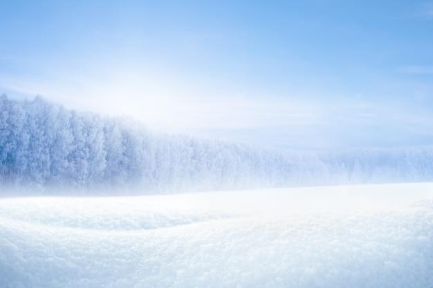 晴れた凍るような日の雪の吹きだまりと冬の森