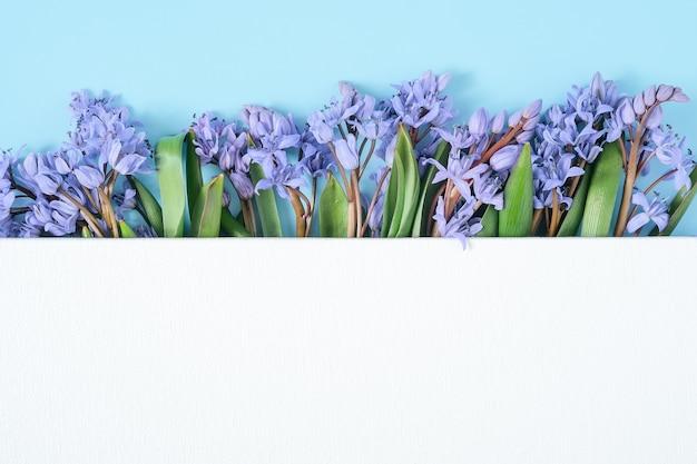Подснежник цветы под пустой белый фон