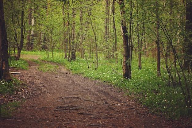Подснежники по тропинке в лиственном лесу.