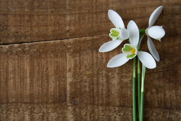 木製の背景にスノードロップ。春の白い新鮮な花。