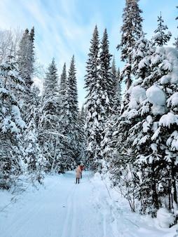 눈이 산 숲에 눈이 덮여 가문비 나무, 전나무와 자작 나무 나무. 언덕의 경사면에 snowdrifts입니다. 겨울 풍경-눈에 덮인 백그라운드와 텍스트를위한 공간. 겨울 여행 및 휴식 개념