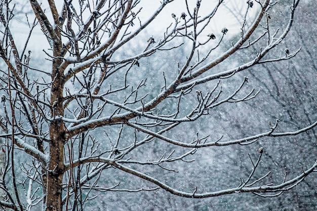 森に降る雪。冬の森の裸木の枝