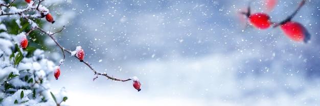 森の中の降雪。降雪時に赤いベリーとローズヒップの枝を持つ冬の森のパノラマ。コピースペース