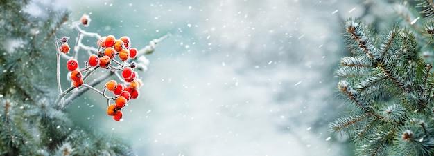 森の中の降雪。降雪時のトウヒとナナカマドの枝と冬の森のパノラマ。コピースペース