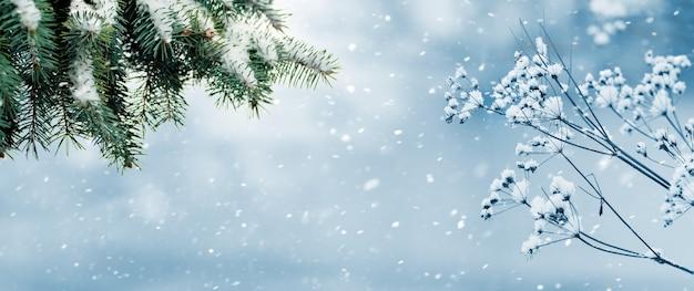 森の中の降雪。降雪時のトウヒの枝のある冬の森のパノラマ。クリスマスの背景。コピースペース