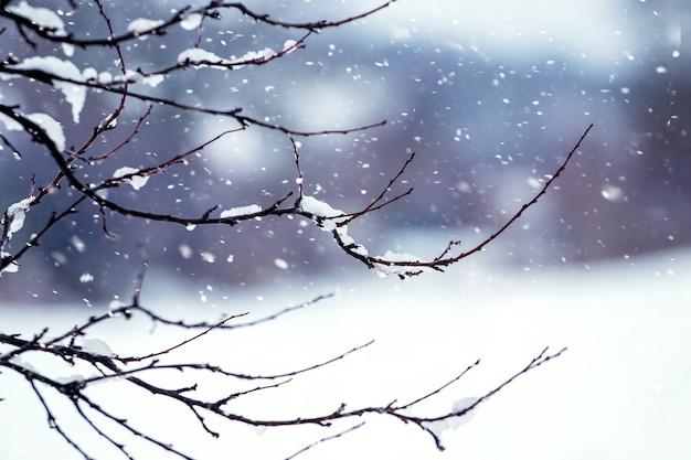森に降る雪。背景をぼかした写真に雪に覆われた木の枝