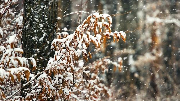 Снегопад в лесу, заснеженные ветви деревьев с сухими листьями