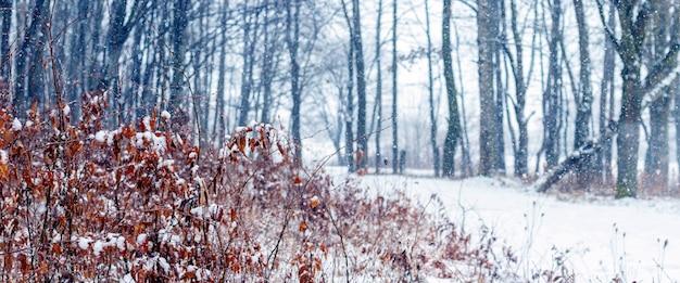 Снегопад в зимнем лесу. панорама зимнего леса с дорогой между деревьями
