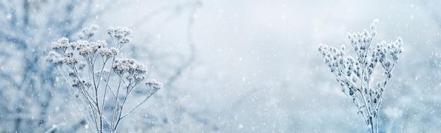 冬の森の降雪。降雪の下でぼやけた背景に雪に覆われた乾燥した植物。メリークリスマスと新年あけましておめでとうございます、コピースペースの背景。冬のおとぎ話。