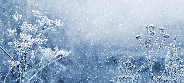 겨울 숲에 강설량입니다. 눈 아래 흐린 배경에 눈 덮인 마른 식물. 기쁜 성 탄과 새 해 복 많이 받으세요 인사말, 복사 공간 배경. 겨울 동화.