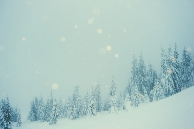 Snowfall in winter misty forest. landscape with trees covered snow
