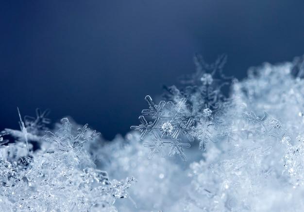 雪の冬の季節のスノーフレーク