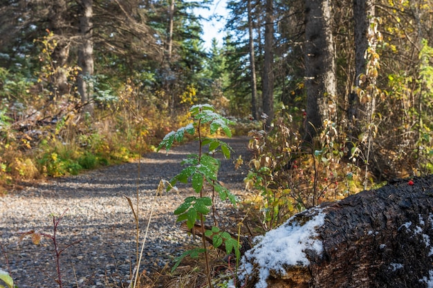雪に覆われたポリスマンクリークリバーサイドトレイル