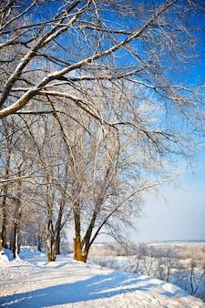 冬の雪に覆われた公園