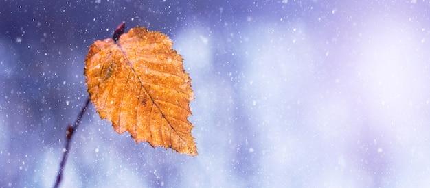 森の中の吹雪。降雪、パノラマ、コピースペースの間に森の木の枝の最後の乾燥した葉。森の中の冬の始まり