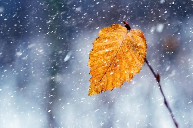 森の中の吹雪。降雪時の森の木の枝の最後の乾燥した葉。森の中の冬の始まり