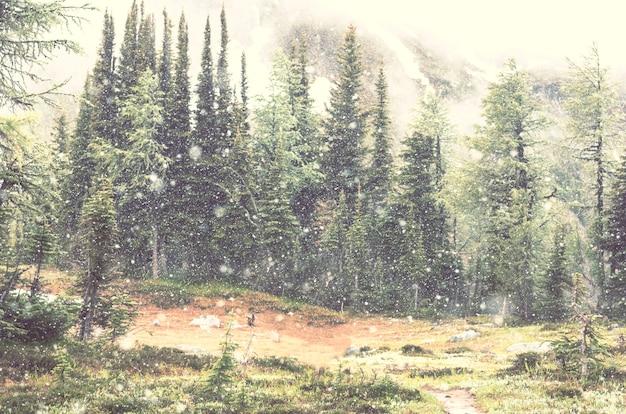 森の中の雪に覆われた吹雪。冬の背景。