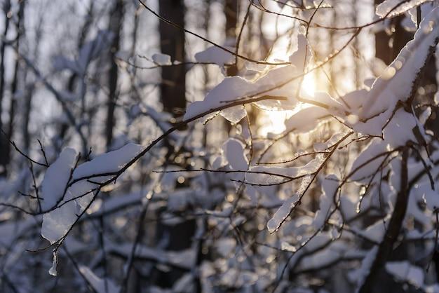 日光、冬の背景に氷の結晶と雪に覆われた枝。
