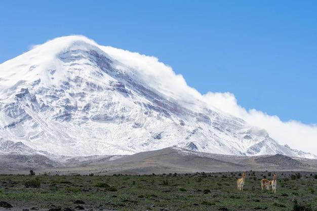Снежный вулкан чимборасо