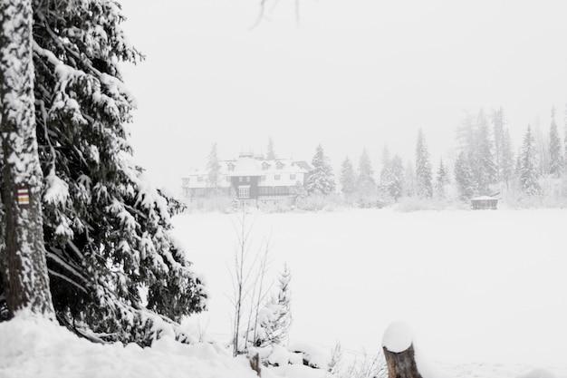 Снежное поле и лес
