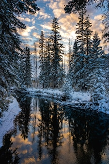 Snowy forest and colourful clouds reflected on river like a mirror beautiful scenery in winter
