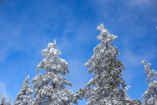 雪に覆われた森の風景