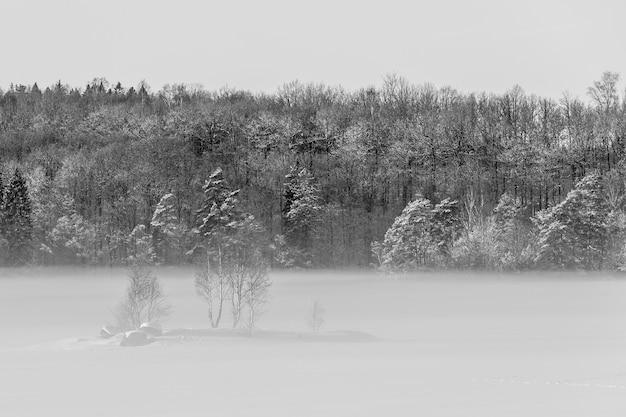 霧深い寒い日の雪に覆われた森