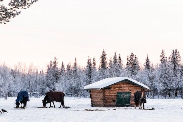 スウェーデン北部にある雪の多い森