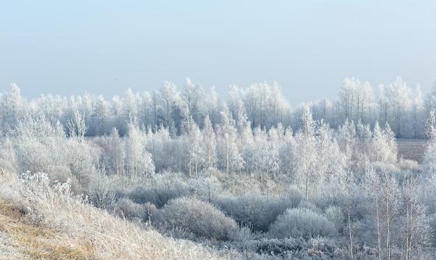 숲의 눈 내리는 서리가 내린 아침과 밝은 흰색 서리와 사방에 침묵