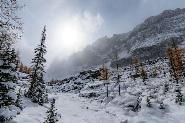 カナダ、ヨーホー国立公園の吹雪の中の太陽の光が降り注ぐ雪の丘