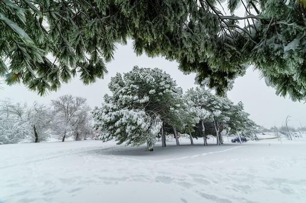 눈 폭풍 filomena로 인해 마드리드의 눈 덮인 풍경. 공원, 거리, 나무가 모두 눈으로 덮여 있습니다. 스페인