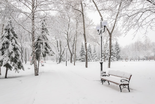 Snowy landscape with benches in the winter city park