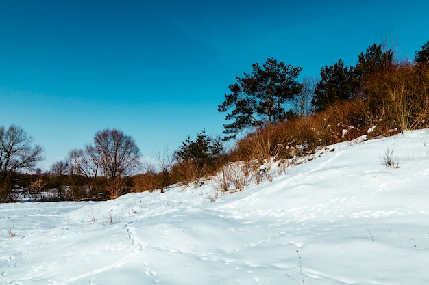 Snowy landscape with footprints and trees against blue sky