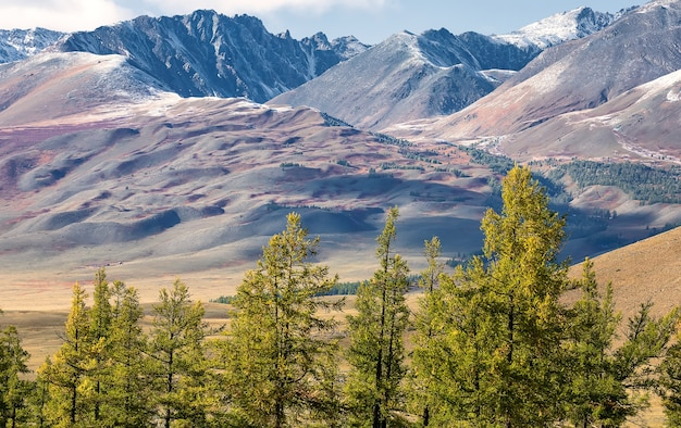 Снежный горный массив и лиственничный лес. сибирь. республика алтай. россия