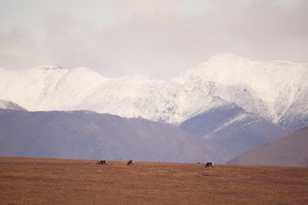 Snowy mountains in the gates of the arctic national park