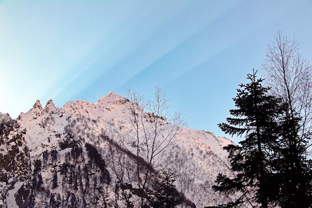 雪に覆われた山々は雲の青い空に木々でピークに達します