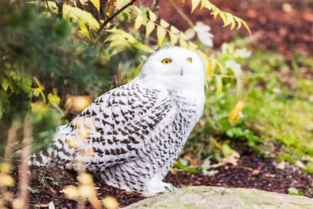 Snowy owl perched on a branch in spring