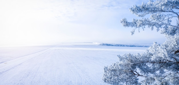 Snowy pine against winter field and blue sky, winter landscape, with place for text