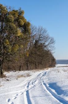 숲을 따라 눈 덮인 길, 겨울 풍경