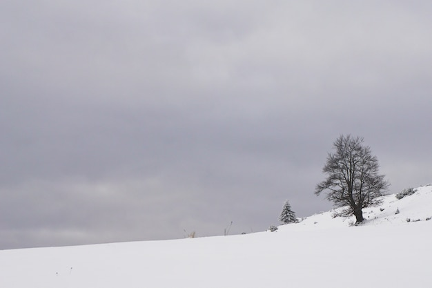 Fundata, transylvania, romania의 잎이없는 나무가있는 눈 덮인 농촌 지역