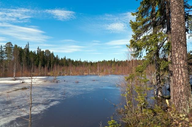 春の森の雪に覆われたロシアの風景。