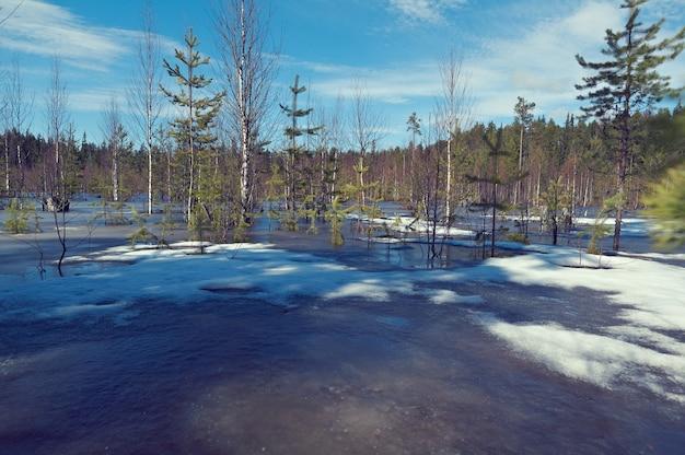 雪に覆われたロシアの風景。春先に森の中で雪が溶ける