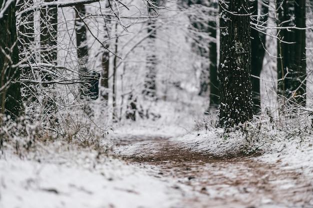 겨울 숲에서 눈 덮인 트랙입니다.